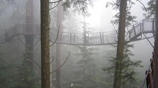 آیا می توانید از این پل ها گذر کنید ؟