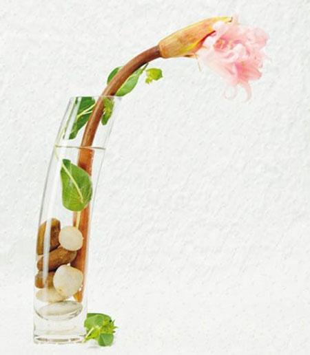 گلدانهایی زیبا در منزلتان داشته باشید +تصاویر و معرفی چند گل