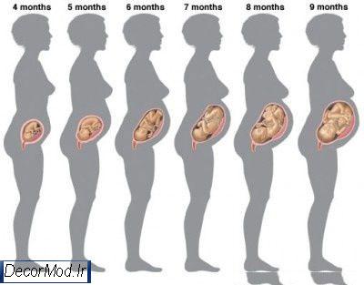 بارداری هفته به هفته با تصویر جنین 1