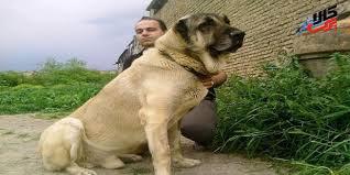 سگ سرابی 3