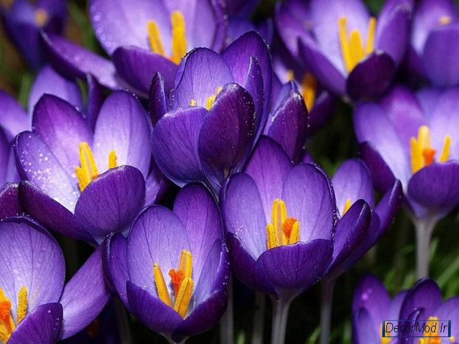 عکس گل 1