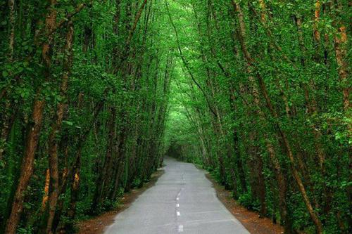 جنگل های بکر مازندران 0909