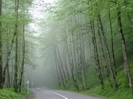جنگل های بکر مازندران 9999