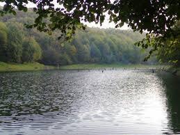 جنگل های بکر مازندران  098