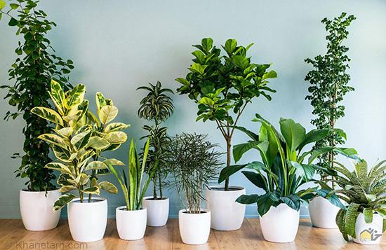 گیاهان آپارتمانی که نیاز به آفتاب ندارند .