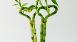 بهترین گیاهان آپارتمانی